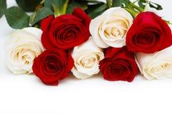Rode en witte geïsoleerde_ rozen Stock Afbeelding