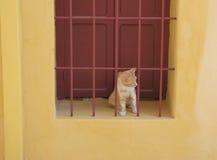 Rode en witte haarkat op het venster Stock Afbeelding