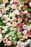 Rode en witte kleurenbloemen Royalty-vrije Stock Afbeelding