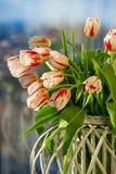 Rode en witte mooie tulpenclose-up Stock Fotografie