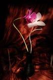 Rode en witte orchideeën royalty-vrije stock fotografie