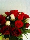 Rode en witte rozen stock foto's