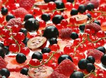 Rode en zwarte bes royalty-vrije stock afbeelding