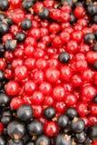 Rode en zwarte bessen Royalty-vrije Stock Afbeeldingen