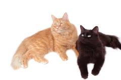 Rode en zwarte kattenvrienden Stock Foto's