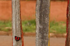 Rode en zwarte vlinder Royalty-vrije Stock Foto's