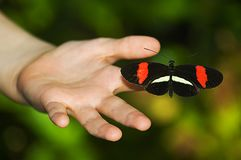 Rode en zwarte vlinder op hand stock fotografie
