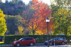 Rode esdoorn Daling van Vermont Royalty-vrije Stock Afbeeldingen