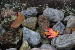Rode esdoorn leafe op rivierstenen en bemoste achtergrond stock foto's