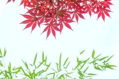 Rode esdoornbladeren Royalty-vrije Stock Fotografie