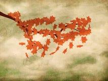 Rode esdoornbladeren op grungeachtergrond Royalty-vrije Stock Afbeelding