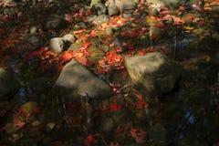 Rode esdoornbladeren op steen in beek Stock Afbeeldingen