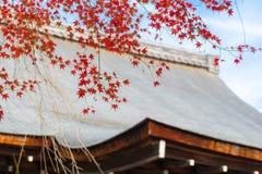 Rode esdoornbladeren over het dak tijdens de herfst in Japan Royalty-vrije Stock Foto's