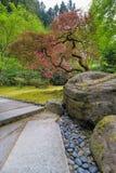 Rode Esdoornbomen bij Japanse Tuin Stock Foto