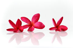 Rode flowers spa royalty-vrije stock foto's
