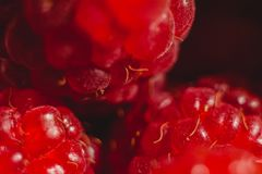Rode frambozenvruchten royalty-vrije stock foto