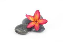 Rode frangipanibloem met zenstenen Stock Afbeeldingen