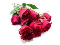 Rode geïsoleerdei rozen Stock Afbeelding