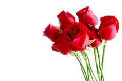 Rode geïsoleerdei rozen Stock Afbeeldingen