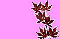 Rode geïsoleerdet bladeren Stock Afbeelding
