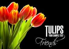Rode geen tulpen de zwarte achtergrond Stock Foto's