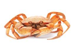 Rode gekookte krab die op witte achtergrond wordt geïsoleerdi royalty-vrije stock foto's