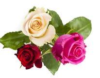 Rode, gele en roze rozen Royalty-vrije Stock Foto