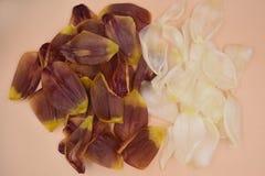 Rode gele en witte tulpenbloemblaadjes op de levende koraalachtergrond stock foto