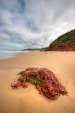 Rode geologische rotsvorming, Phillip Island Royalty-vrije Stock Afbeeldingen