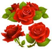 Rode geplaatste rozen Stock Afbeelding