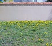 Rode gepleisterde hoge bakstenen muur op een heuvel met bloeiende paardebloemen stock afbeeldingen