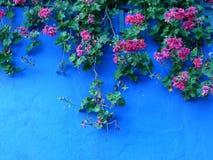 Rode geraniums op blauwe muur Royalty-vrije Stock Afbeeldingen