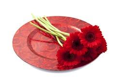 Rode gerbera Royalty-vrije Stock Afbeelding