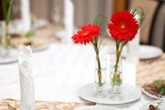 Rode gerbera Royalty-vrije Stock Foto's