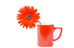 Rode Gerbera-bloem in rode koffiekop Royalty-vrije Stock Afbeeldingen