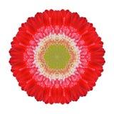 Rode Gerbera Mandala Flower Kaleidoscopic Isolated op Wit stock fotografie