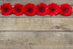 Rode gerberabloemen Stock Foto's