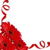 Rode gerberabloemen in een hoek Stock Fotografie