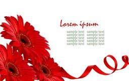 Rode gerberabloemen in een hoek Stock Afbeeldingen