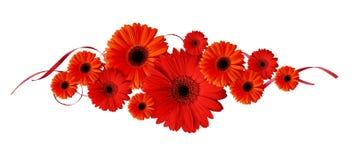 Rode gerberabloemen en linten in een lijnsamenstelling Royalty-vrije Stock Fotografie