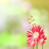 Rode gerberabloemen en vlinders Royalty-vrije Stock Afbeelding