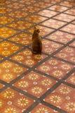 Rode geruite kat Stock Fotografie