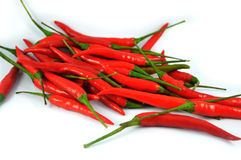 Rode geïsoleerdes Spaanse peperspeper Stock Fotografie