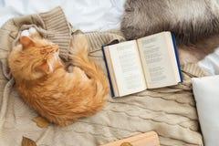 Rode gestreepte katkat die op deken thuis in de winter liggen Stock Foto