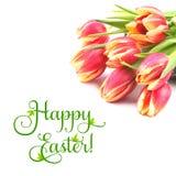 Rode gestreepte tulpen op witte achtergrond, tekstruimte Stock Fotografie