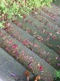 Rode gevallen bladeren op stappen in park stock afbeelding