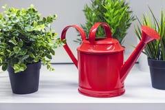 Rode gieter voor het water geven van bloemen en installaties royalty-vrije stock foto's