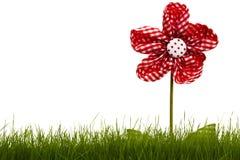 Rode gordijnbloem met gras Stock Foto