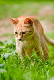 Rode Griekse verdwaalde kat in aard Stock Foto