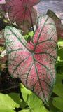 Rode groen Royalty-vrije Stock Fotografie